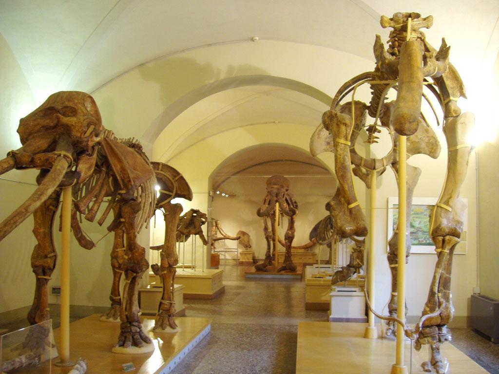 Sistema Museale di Ateneo – Museo di Geologia e Paleontologia